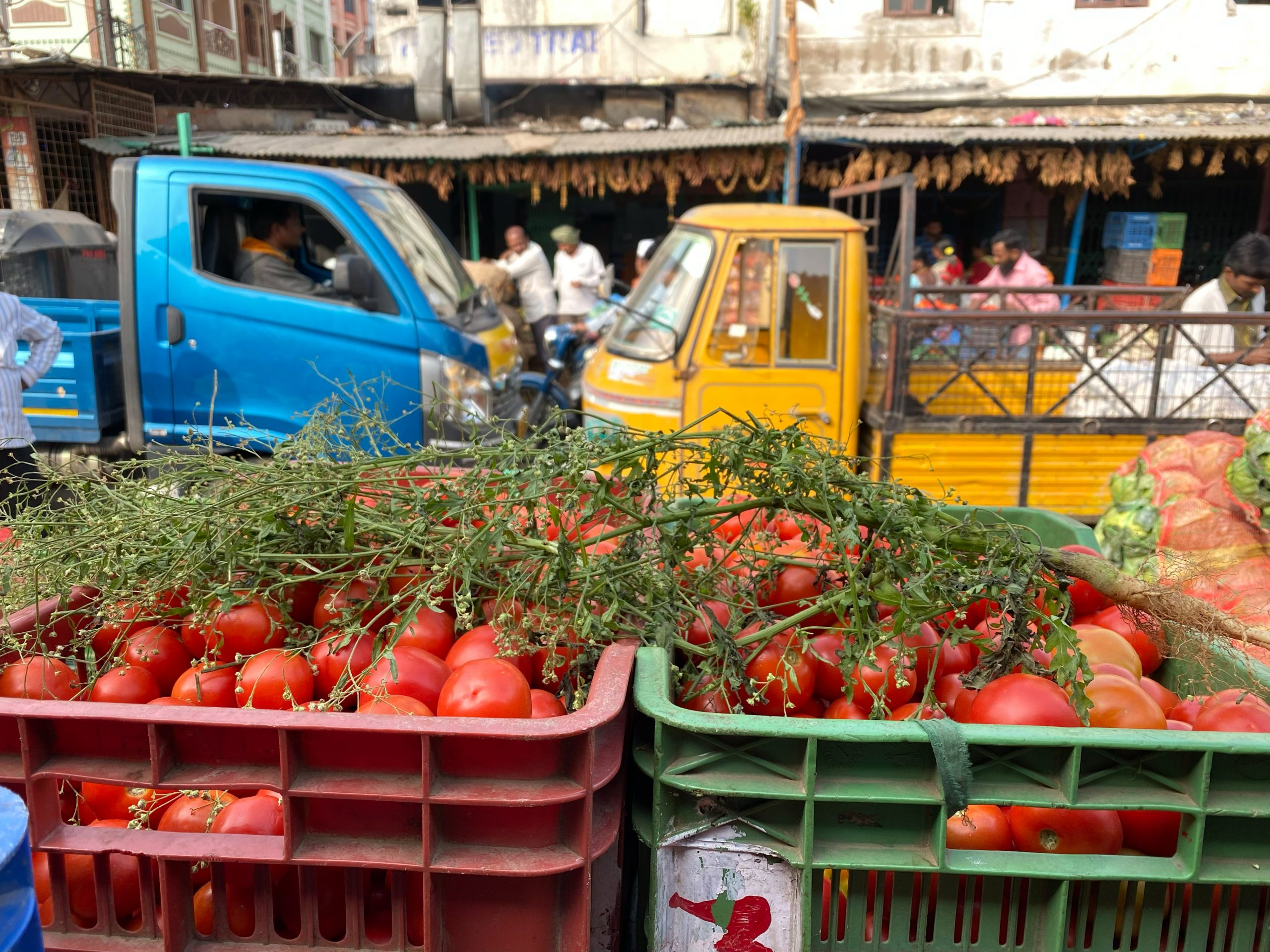 bins of tomatos