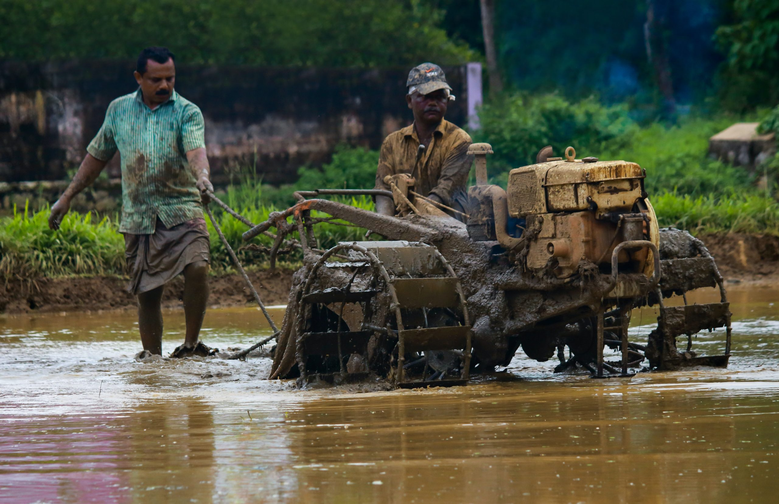 A man drives a tractor through a rice paddy