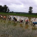 group of women farming field