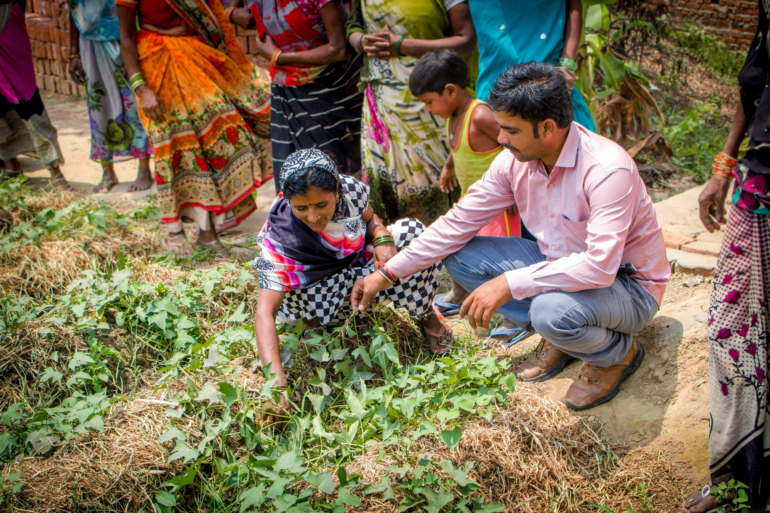 People examining crops