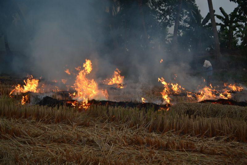 A burning field