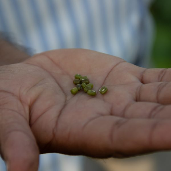 A hand holding green seeds